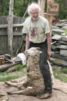 When shearing sheep, you wear special shoes to keep from injuring them.